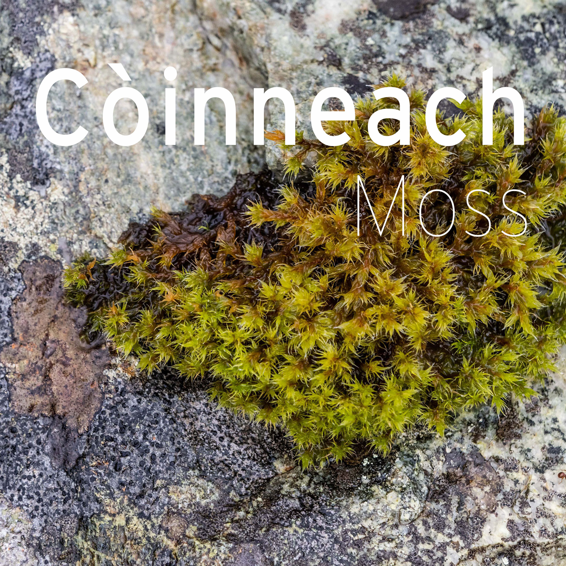 moss with gaelic annotation