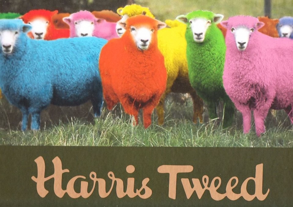 multi-coloured-harris-tweed-sheep-1920